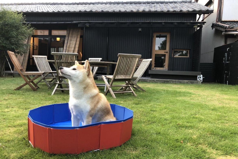 かわいいきんときちゃんとプール.jpg