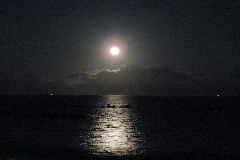 月夜の散歩道