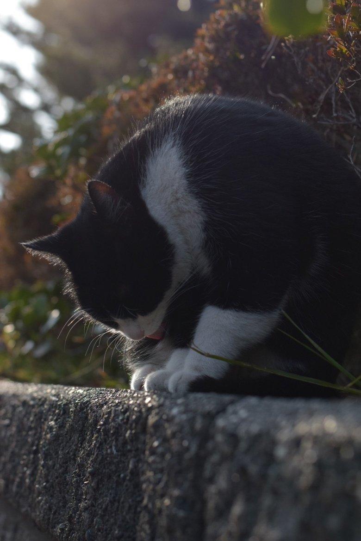 港町の癒し 野良猫編