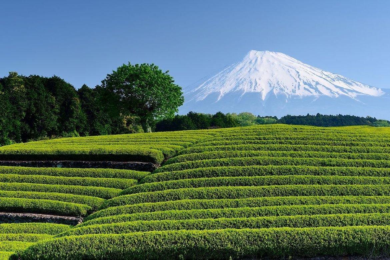 静岡県にお住まいの方へ