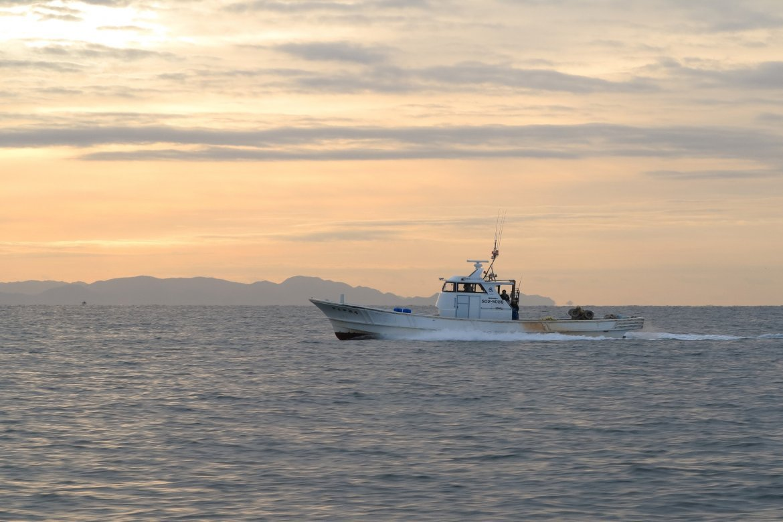 しらす漁禁漁期間について